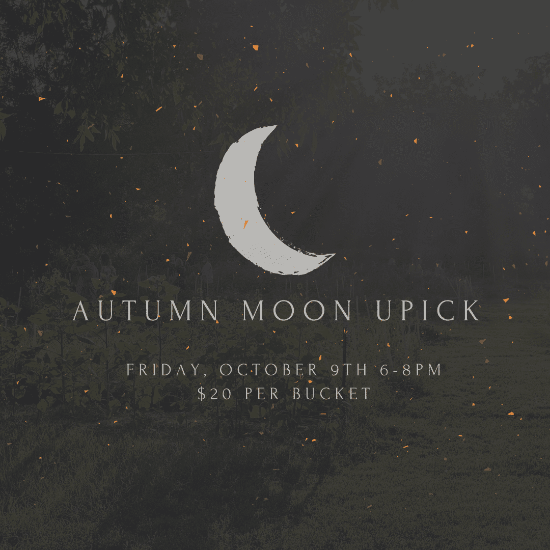 Autumn Moon Pick